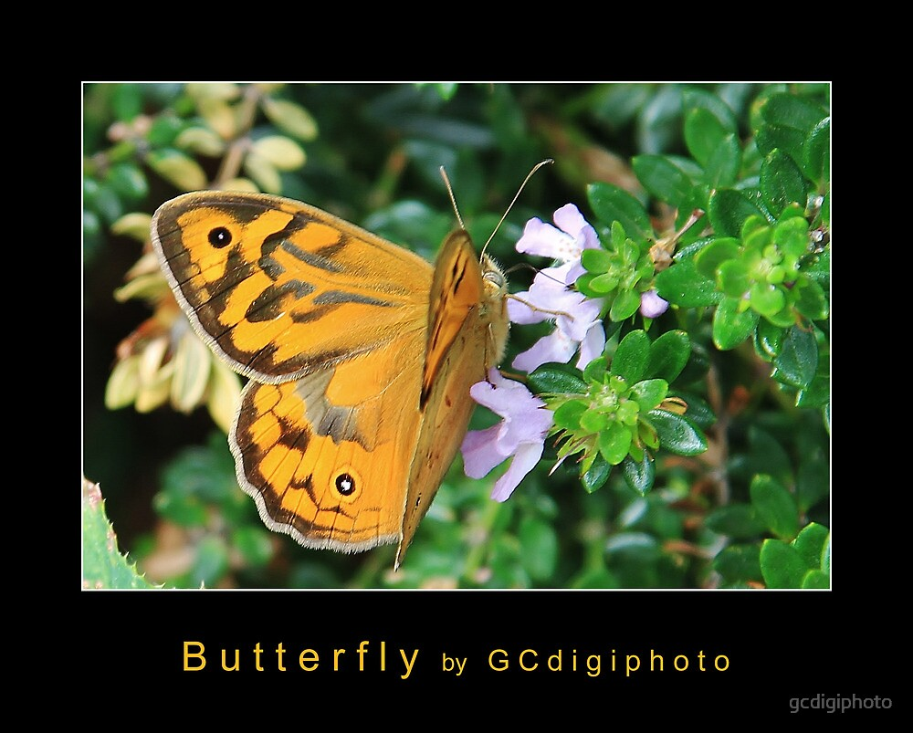 Butterfly by gcdigiphoto