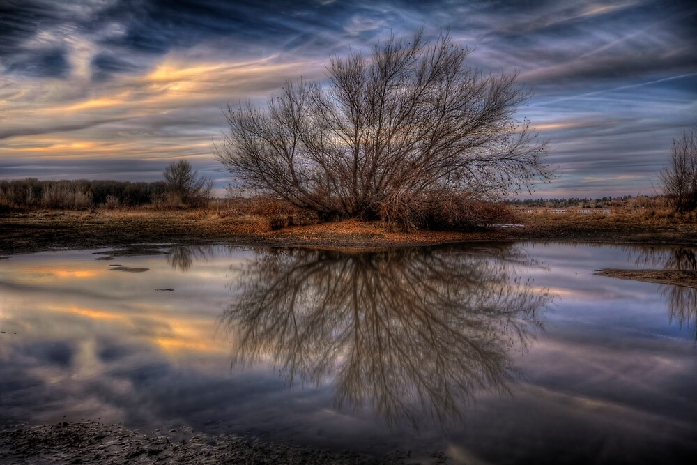Leafless by Bob Larson