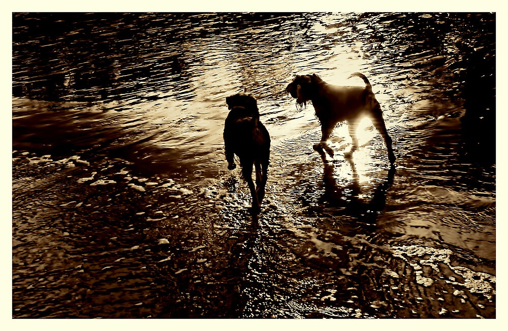 Best Friends On Beach At Sunset by gmb22