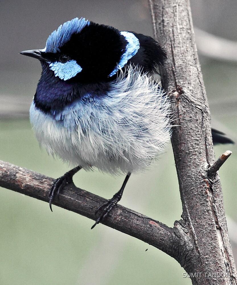 Blue Bird by SUMIT TANDON