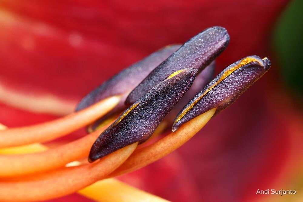 Stamens by Andi Surjanto