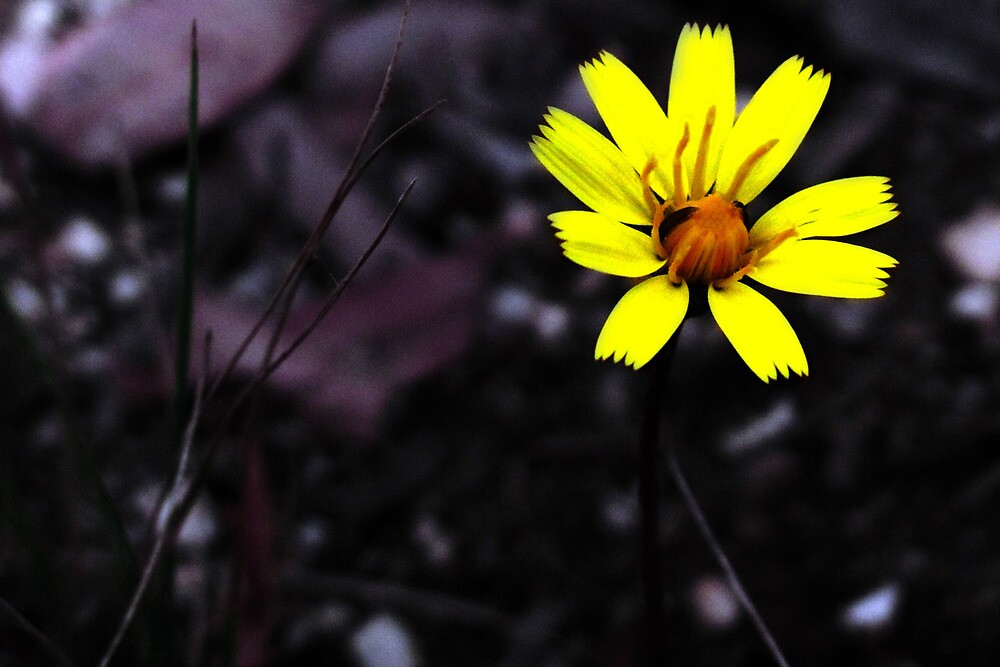 yellow flower by Elyse Clarence