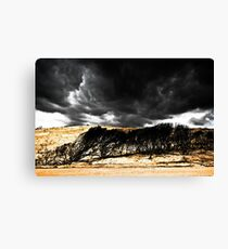 After the Bushfires Canvas Print