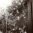 Wrought Iron Fence with Flowers, Sepia, Tilt-Shift by PhotosByTrish