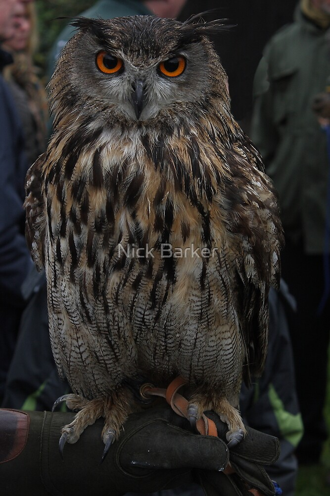 European Eagle Owl by Nick Barker
