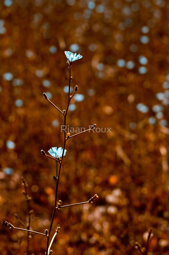 The Blue Flowers by Riaan Roux