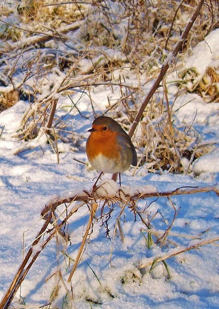 robin redbreaqst in snow by georgeporteous