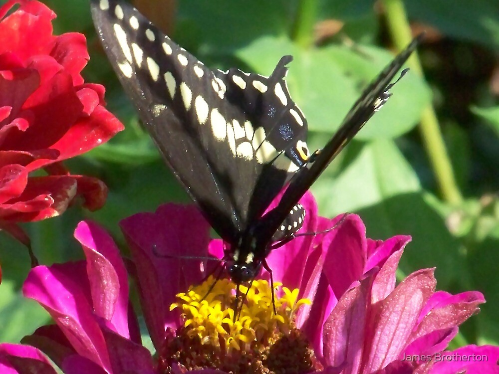 Butterfly And Flower by James Brotherton