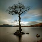 Milarrochy Tree (1) by Karl Williams