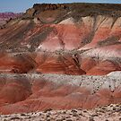 The Painted Desert  8018 by Bo Insogna