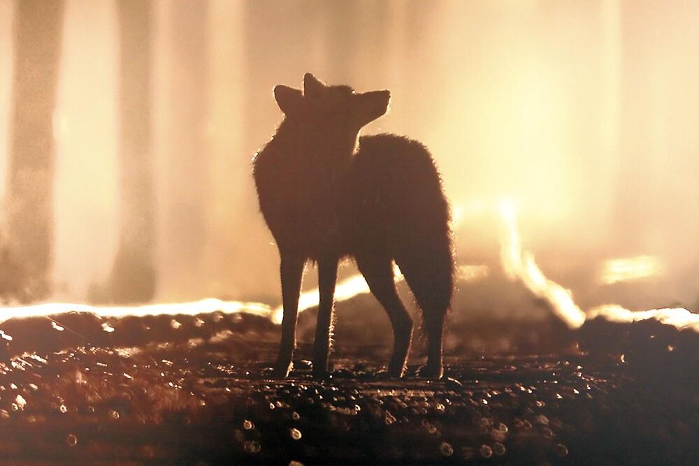 Lone Wolf by joshuatree2