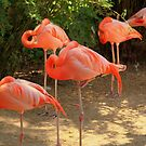 Flamingos by Purohit