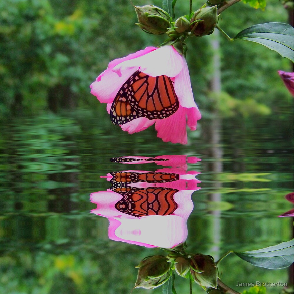 Butterfly Reflections by James Brotherton