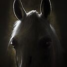 in the stable by tarantella