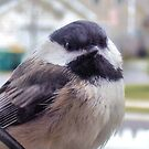 Puffy Lil Chickadee by Melissa Carlini