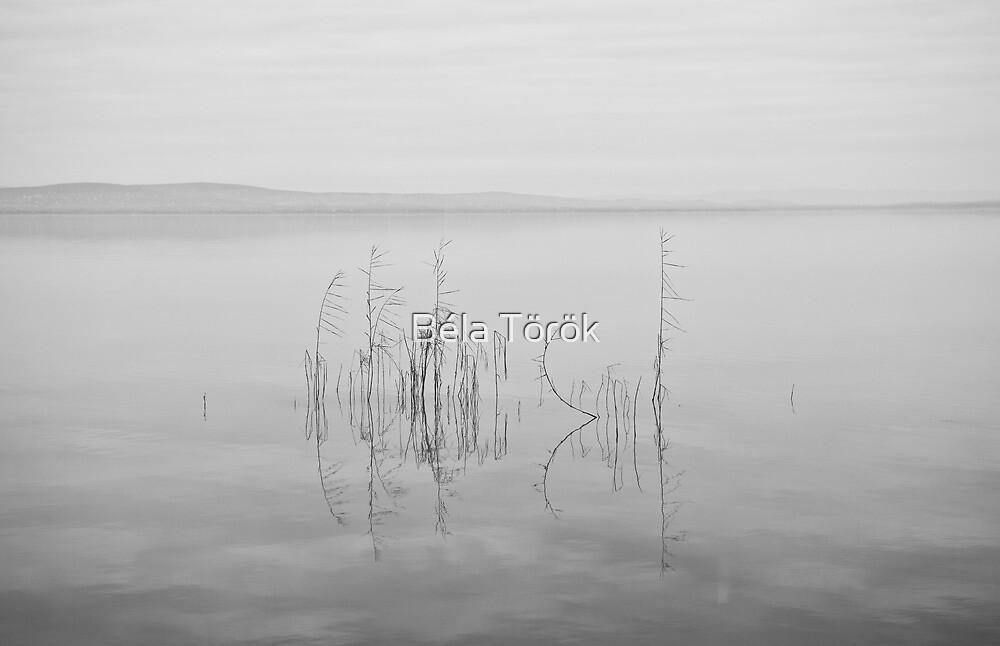 Balaton by Béla Török