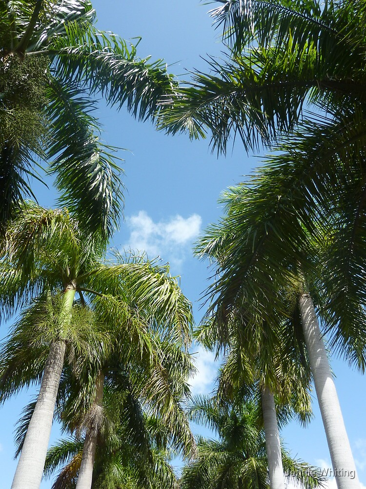 Palm Trees by Jennie Whiting