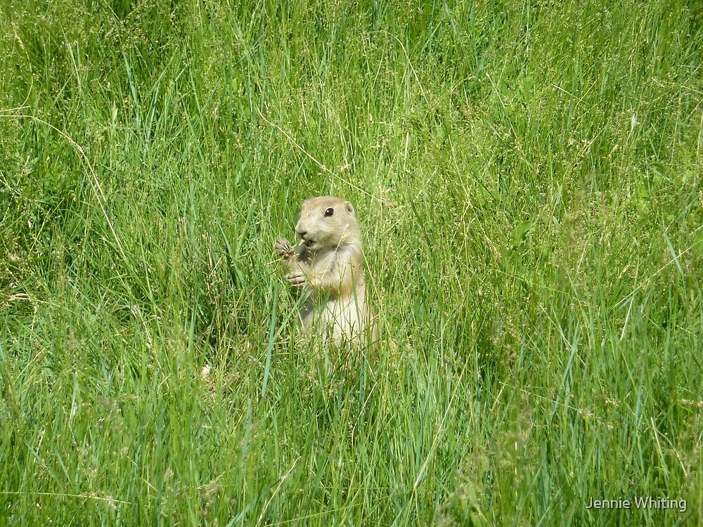 Prairie Dog by Jennie Whiting