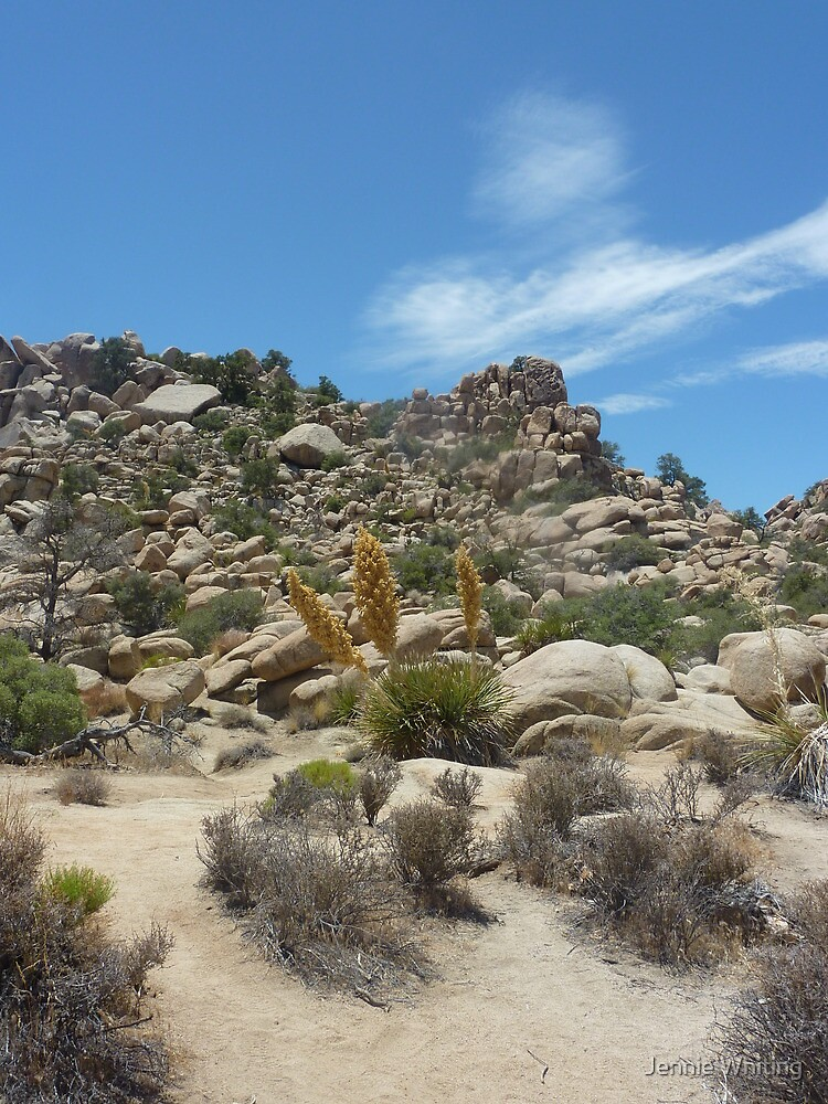 Joshua Tree National Park by Jennie Whiting