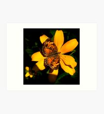 Pearl Crescent Butterfly Art Print