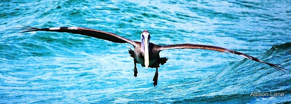 Soaring Pelican by Allison Lane