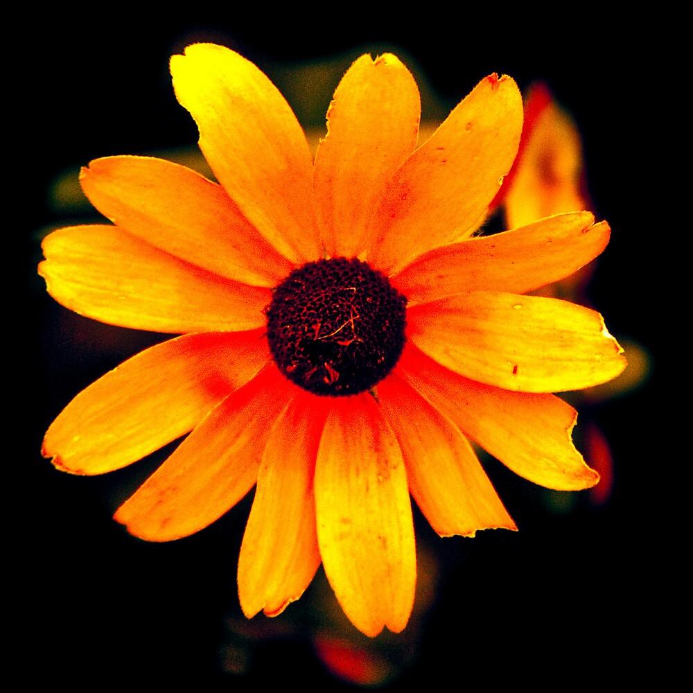 Burnt Flower by ScaredylionFoto
