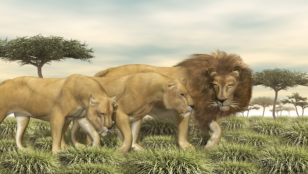 African Lions by Walter Colvin