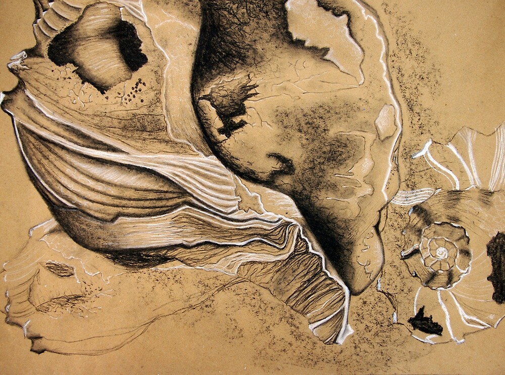 Shell Observation I by Monica Galletto