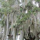 Stunning Spanish Moss by Debbie Robbins