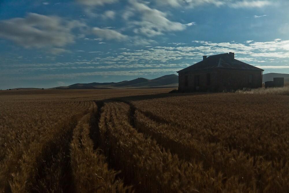 Burra Wheat Field in Moonlight by pablosvista2