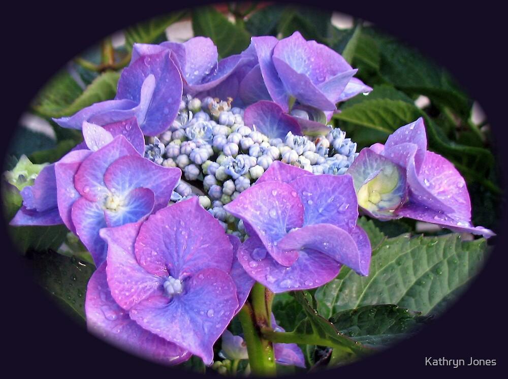 Beautiful Blue Blossom - Lace Cap Hydrangea by Kathryn Jones