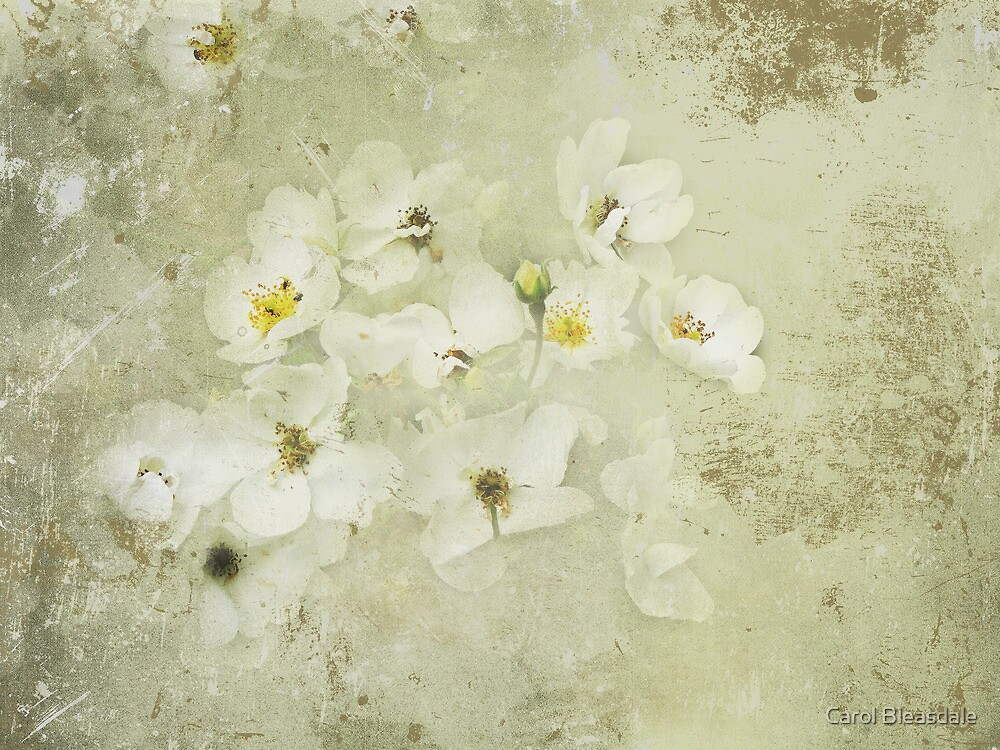 Wild Roses by Carol Bleasdale