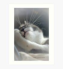 Sully Sunning © Vicki Ferrari Photography Art Print