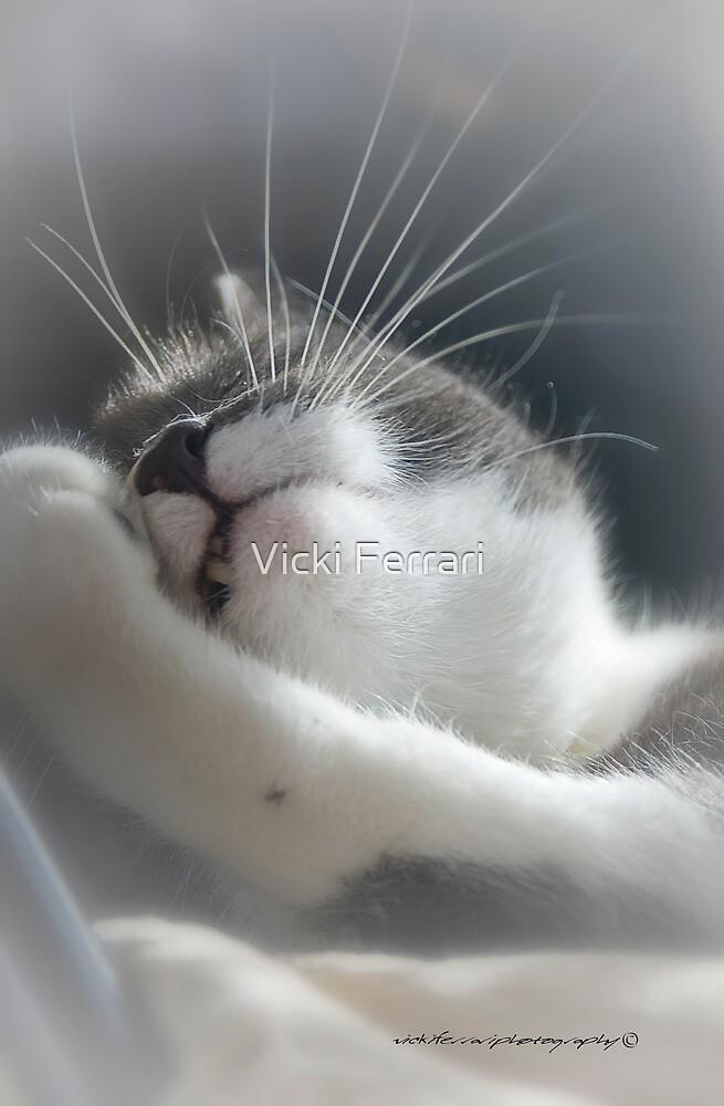 Sully Sunning © Vicki Ferrari Photography by Vicki Ferrari