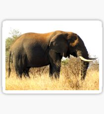 Loxodonta africana Sticker