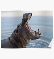 Hippo jaws Poster