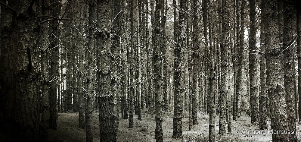 pine cove by Anthony Mancuso
