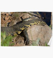 Nile Monitor Poster