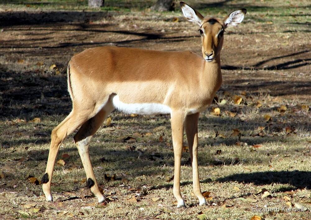 Graceful impala  by Elizabeth Kendall