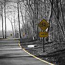 Bicycles 300 Ft Avon Washington Park by David Owens