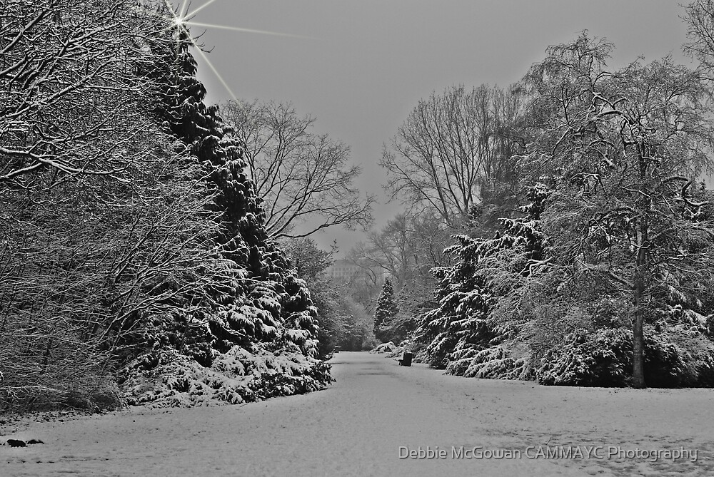 A Sparkling Snow Day by Debbie McGowan CAMMAYC Photography
