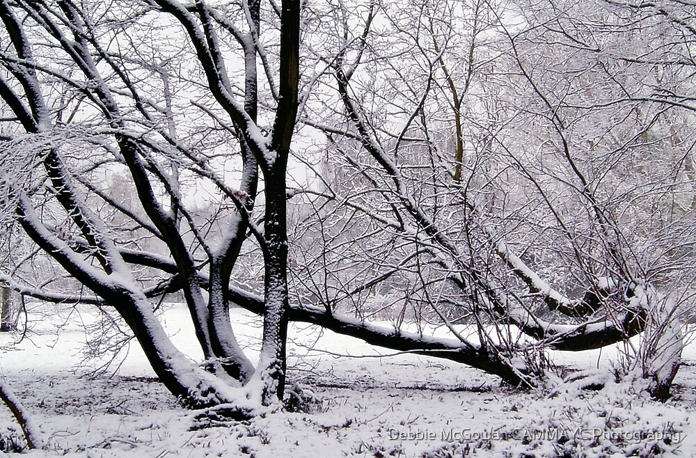 Climbing Snow Trees by Debbie McGowan CAMMAYC Photography
