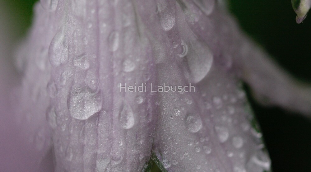 Purple Rain Drop.... by Heidi Labusch