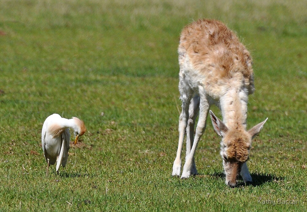 Big And Small Friends! by Kathy Baccari