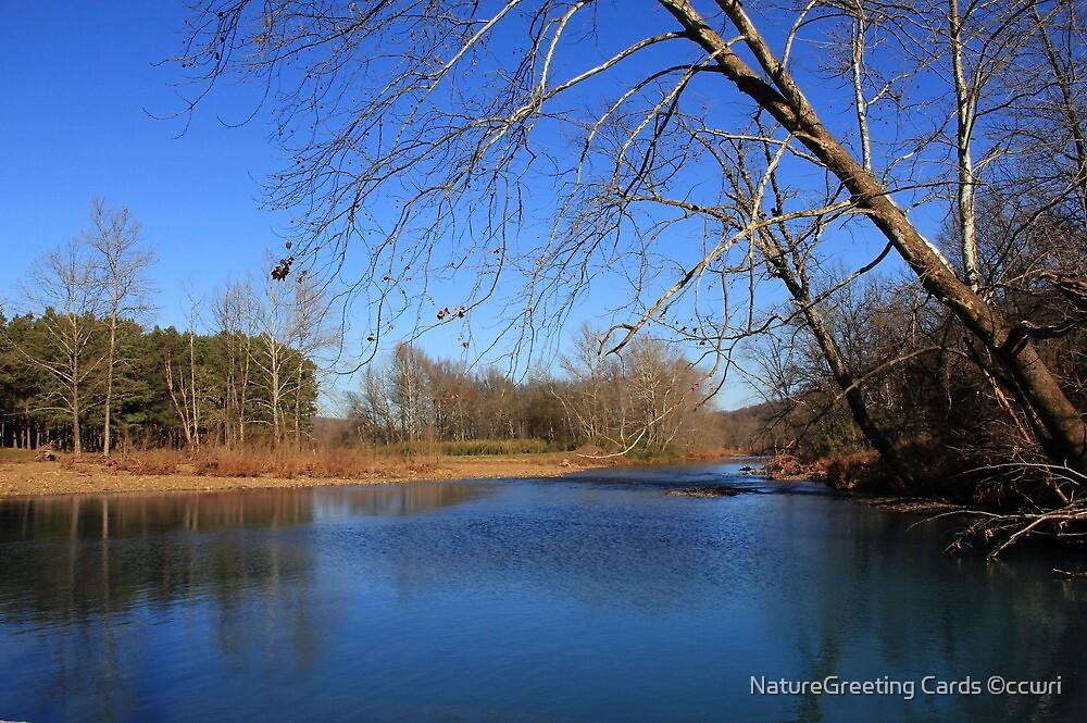I'v Caught Them Wintertime Blues by NatureGreeting Cards ©ccwri