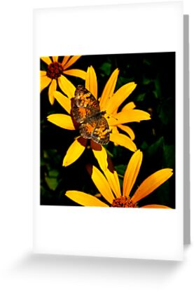 Pearl Crescent On Yellow by Thomas Young