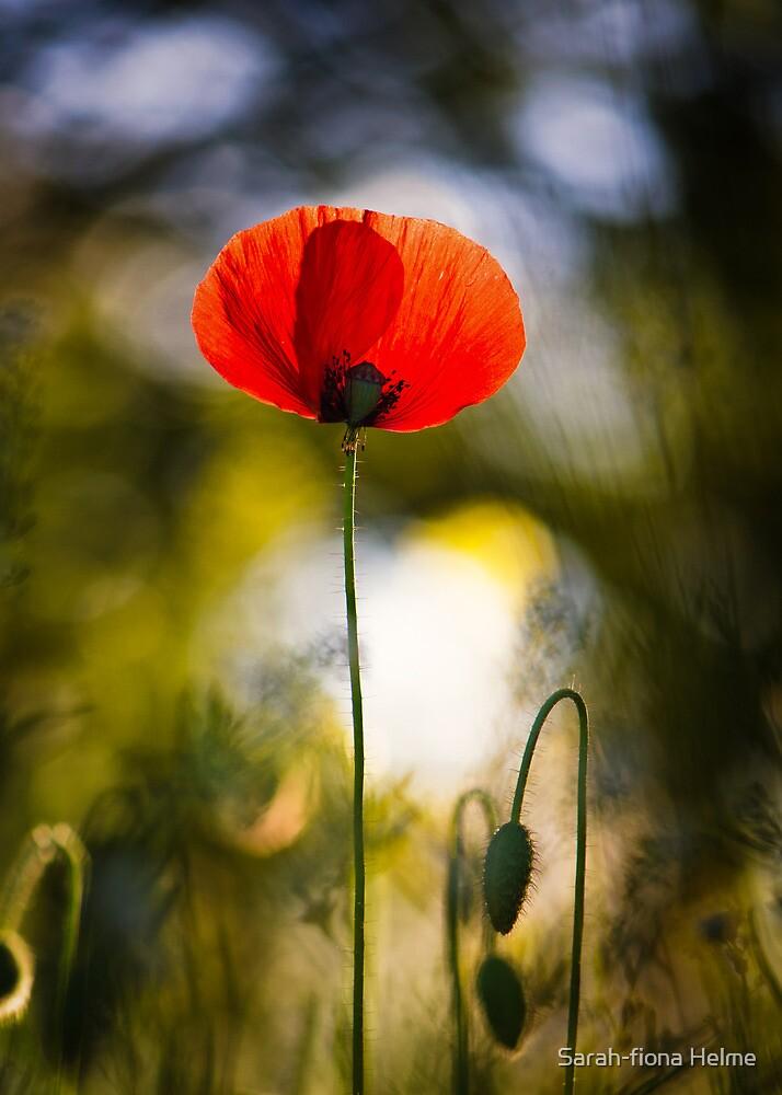 Poppy's Last Day by Sarah-fiona Helme