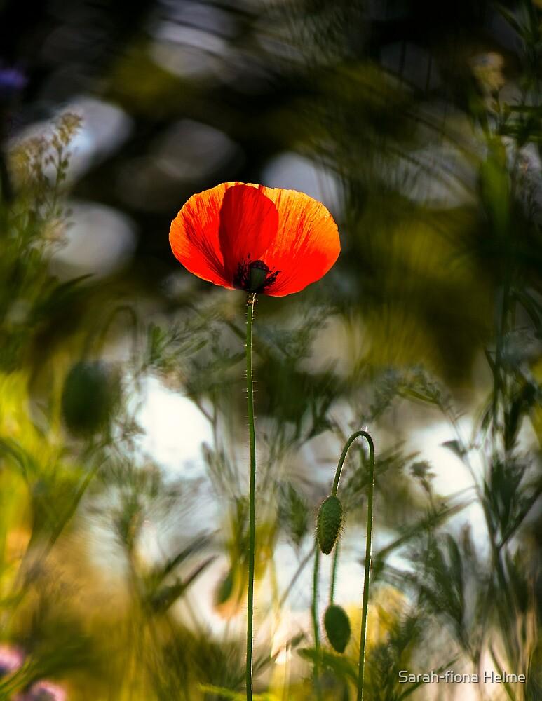 The Last Sunset by Sarah-fiona Helme