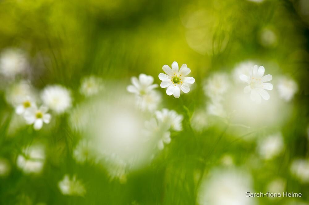 Stitchwort Spring by Sarah-fiona Helme