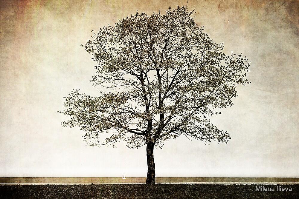 One Tree by Milena Ilieva